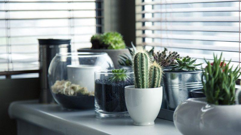 Les avantages d'opter pour les plantes d'intérieur pour sa décoration